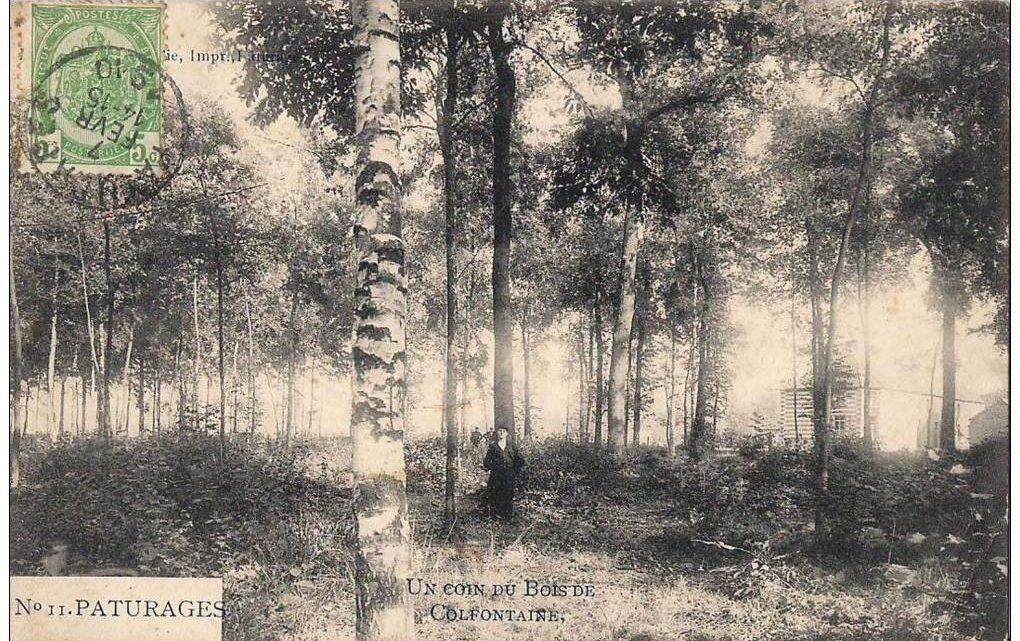 Bois de Colfontaine (6)